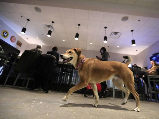 Dogs play at Bark & Brew in Suamico. The new bar is geared toward dogs, with some perks for their humans, too.