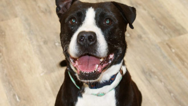 Charlie is available through EGAPL The Heart of RI Animal Rescue League.