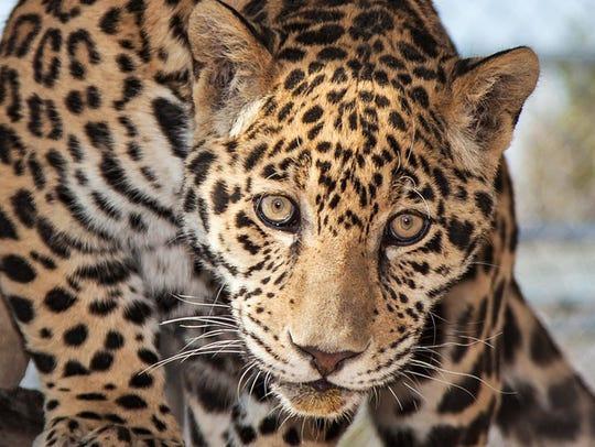 Animal Ark CSI: Cat Science Investigators, June 11.
