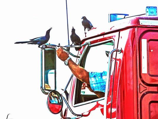 636378276964270087-August-Sally-Mitchell-truck.jpg