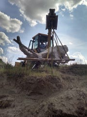 Craig Randall, landowner, lifts the skull from the bank of the Powder River near Broadus.