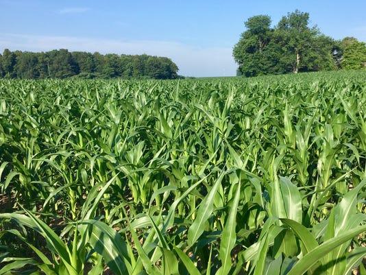 636350311235078439-corn-field-moss.jpg