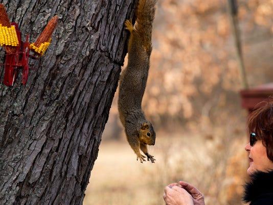 1 squirrel.jpg