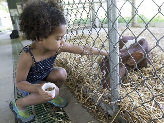 Kiya Hagenow pets a calf in the petting zoo during