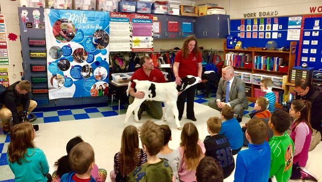 State Sen. Fred Akshar interacts with students — and a calf — at C.R. Weeks Elementary School in Windsor.