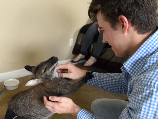 636578590869483262-Jeff-the-Wallaby-14.jpg