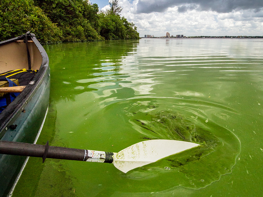 Algae swirls in the Caloosahatchee River, seen July 13 in the Fort Myers area.