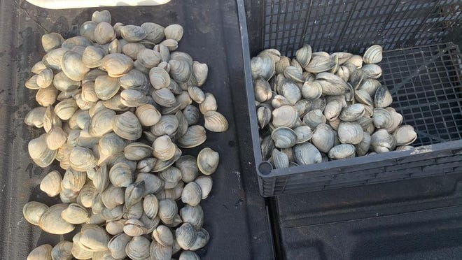 A subsequent inspection of the catch revealed 360 pieces of quahogs, well over the weekly allowable limit of 8 quarts (one peck), according to the WDNR.