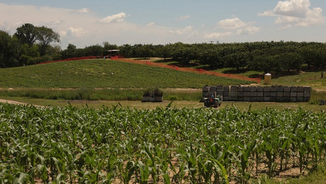 A view of corn crops u-pick strawberry fields and cherry trees are seen at Westview Orchards & Adventure Farm in Washington Township in June, 2013.