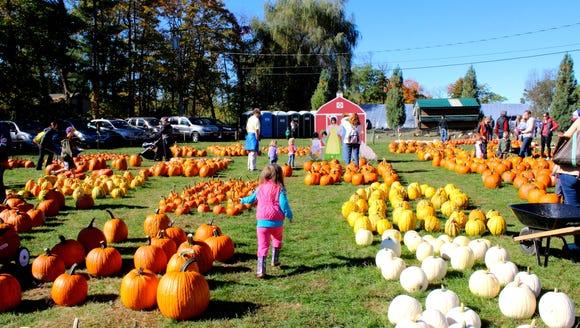 Pumpkins at Harvest Moon Orchard in North Salem, NY