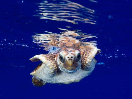 TurtleResearch3.jpg