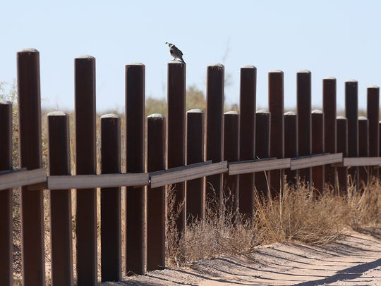 A quail stands atop the border vehicle barrier just west of the Santa Teresa Port of Entry in New Mexico.