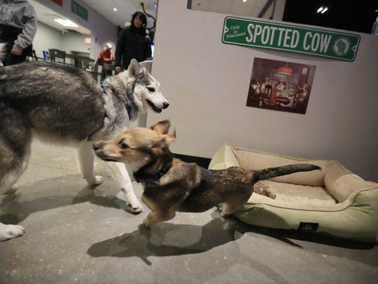 Dogs play at Bark and Brew on Wednesday, November 29,