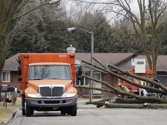 City of Green Bay forestry crews cut down ash trees