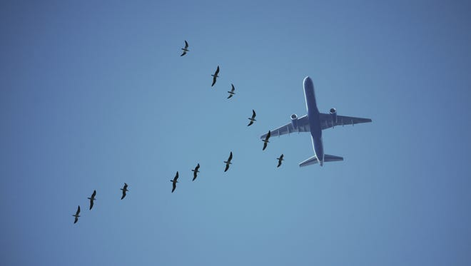 The vast majority of bird strikes occur below 3,000 feet above the ground.