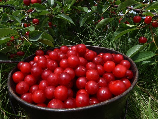 Door County is known for its cherries and cherry pie.