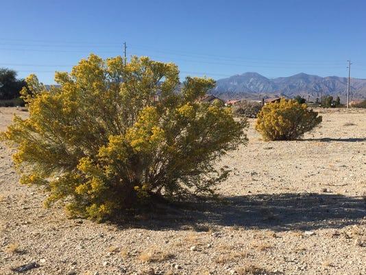 Desert Hot Springs land