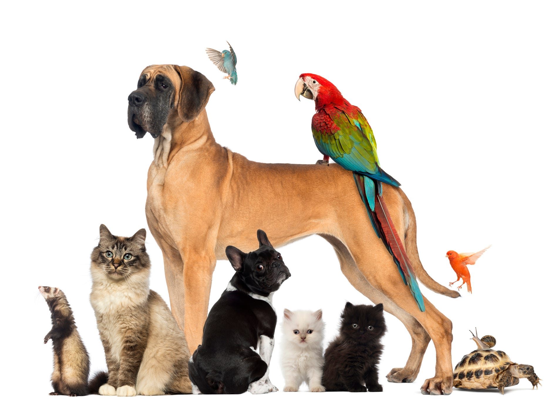 Insiders receive 20% OFF pet boarding at Kindness Animal Hospital in Cape Coral.