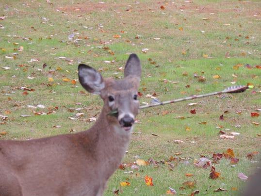 deer arrow