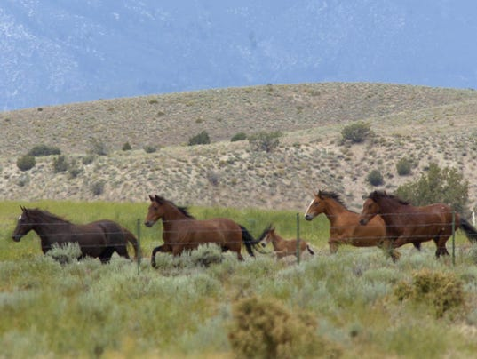 6/10 cd horses 1 lt