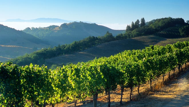 Terlato vineyards include properties in Napa's Rutherford Hills, Chimney Rock and the Stags Leap District — some of California's most exclusive real estate for cabernets and Bordeaux blends.