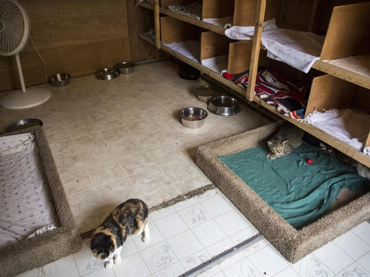 "Feral cats rest inside ""the barn"" at Faithful Friends Animal Society on Thursday afternoon. The rescue has converted a shed into a home for their feral and semi-feral cat population."