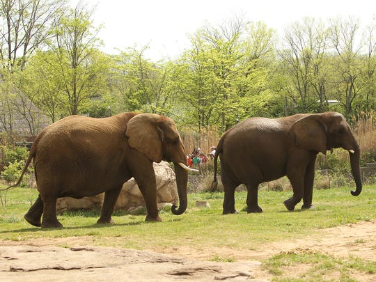 FILE: The elephants at the Nashville Zoo will be relocated so the zoo can renovate and expand its African exhibit area.