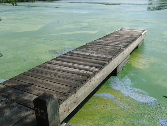 Excess phosphorus that washes into the Wisconsin River feeds a massive algae bloom on the Petenwell Flowage.