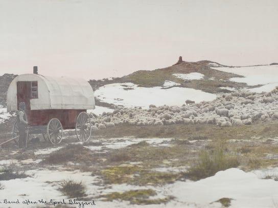 Sheep wagon.JPG