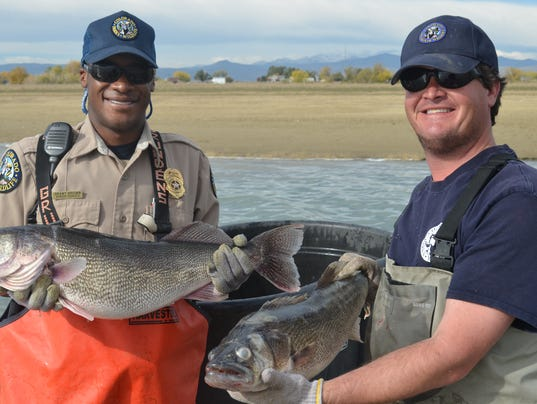 Cpw removing fish from lonetree reservoir for Colorado fish and wildlife