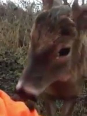 A brave buck nuzzles Dan Hartley while he is deer hunting in Vernon County.