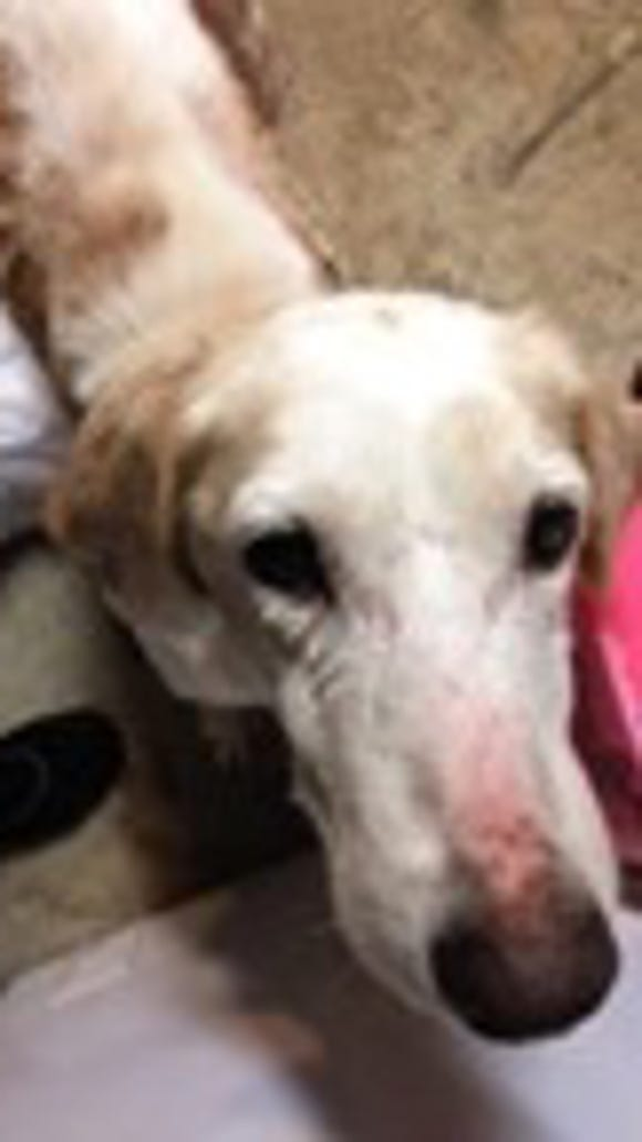 Vinnie is getting a second chance thanks to a local
