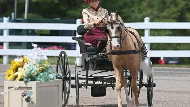 Leanna DiBisceglie of Hamlin guides her Welsh horse in the Ladies/Large Single Pony Reinsmanship class on the opening day of the 44th annual Walnut Hill Carriage Driving Competition in Pittsford on Wednesday.