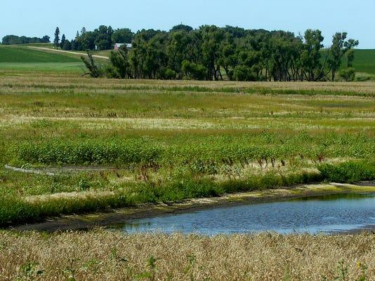 -wetlands07.JPG_20090731.jpg