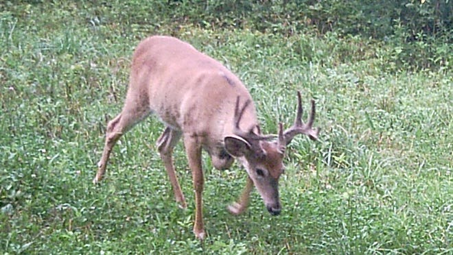 Chronic Wasting Disease has caused alarm in the DNR and perhaps poses a threat to future of deer hunting.