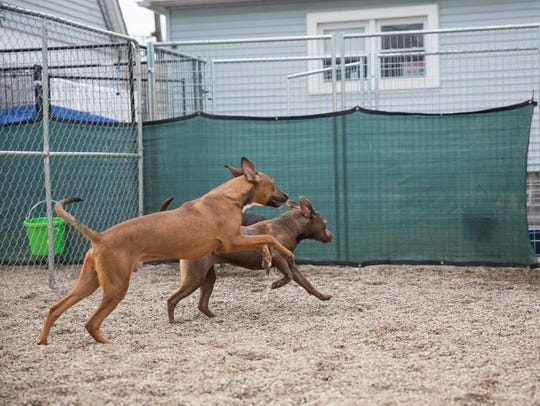Dogs play in the yard at Pit Stop for Change Rescue