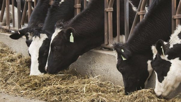 Prices have been low for the last three years because of an abundance of milk on the market.