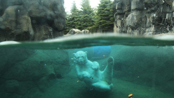 File photo of polar bear Aurora at the Seneca Park Zoo in Rochester in 2012.