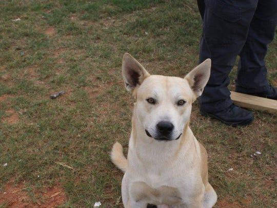 Dog Arrests Owner