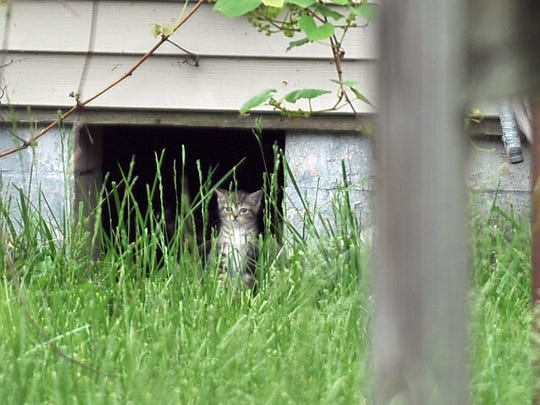A stray cat sits in a opening leading beneath a house on O'Gara Avenue in Lancaster.