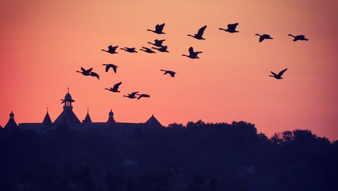 The early morning flight of the Canada geese over St. Joseph Seminary in Yonkers in the fall.