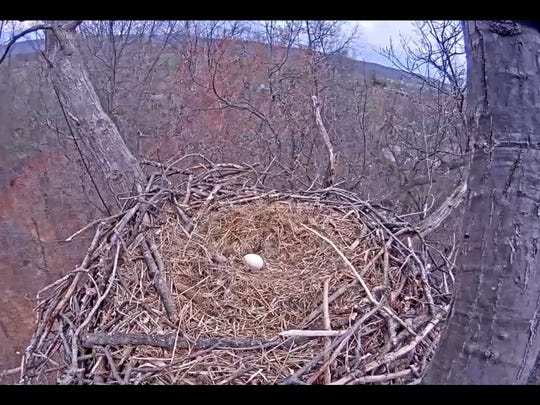 Experts on April 4, 2016, said this bald eagle egg