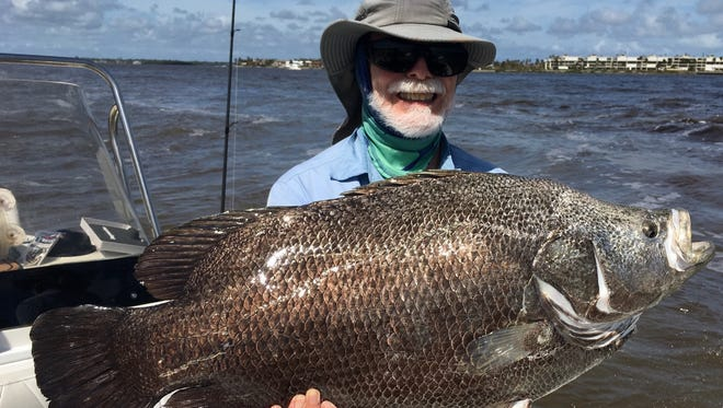 Gerald Goebel, of Port St. Lucie, caught this 22.1-pound tripletail Monday while fishing the St. Lucie Inlet with a live mullet and accompanied by Capt. George Gozdz, of Flatlined charters in Jensen Beach.