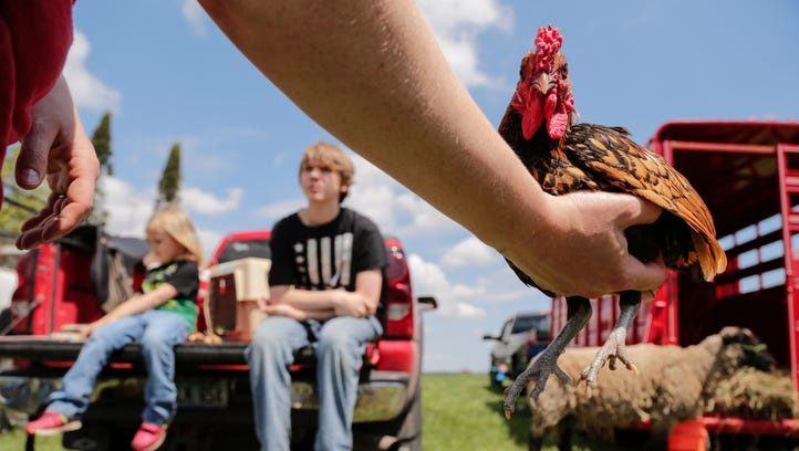 Karen Jarvi of Hancock holds a bird for sale as her