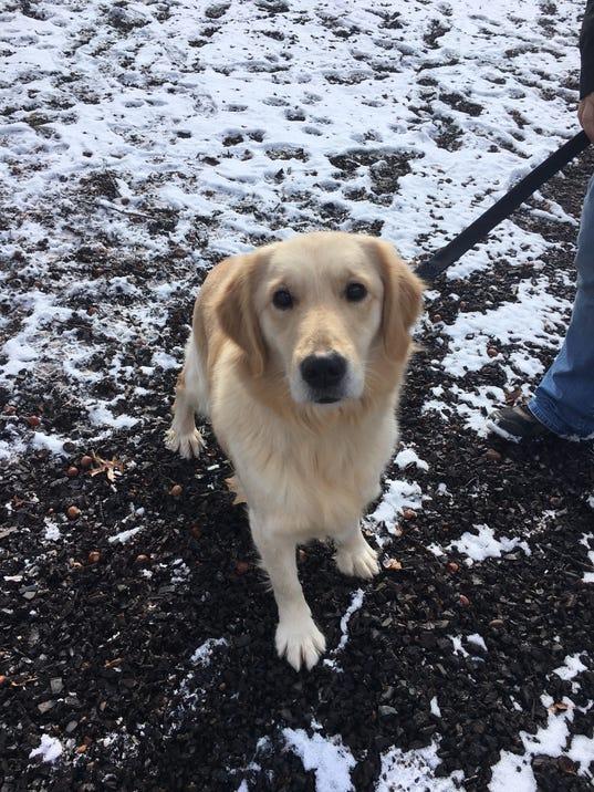 Central Pa Rescue Dogs