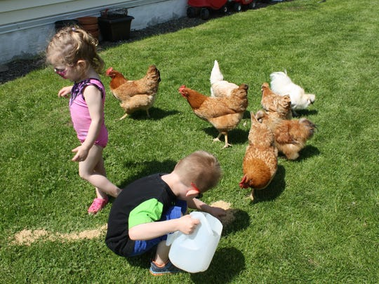 Backyard chicken keepers know that chickens are good for much more than just egg production: chicken waste provides compost materials; many breeds are great foragers and will eat weeds and pesky bugs around the yard and many breeds make great family pets as well.