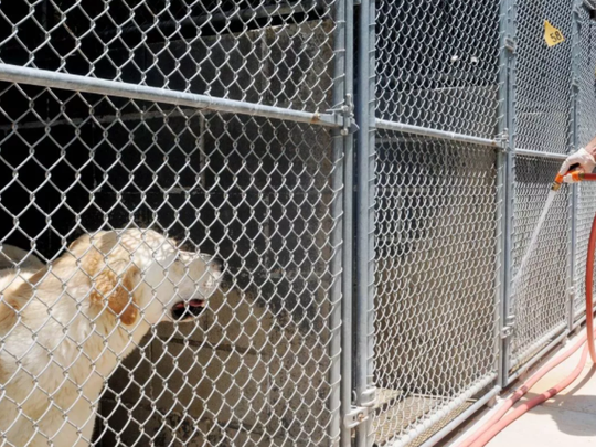 """Possible challenges to privatization include that it is """"not readily apparent"""" that a third party agency exists that could meet the shelter's current needs."""