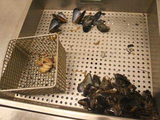 shellfish.testing.JPG
