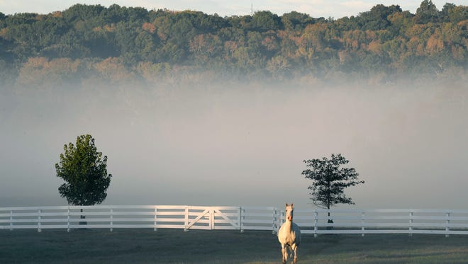 Fog covers a field as a horse runs at River Circle Farm on Sneed Road in Grassland.