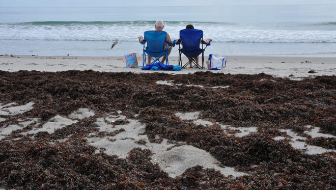 A couple enjoys the beach at the Patrick Air Force Base beach  just north of Pineda Causeway, with mounds of seaweed piled on the beach behind them.